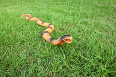 Snake toy Stock Photo