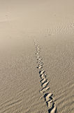 Snake Tracks Stock Photography