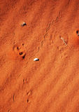Snake tracks on sand dune Stock Image