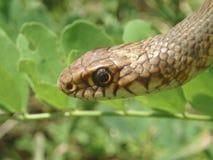 snake trawy. zdjęcia royalty free