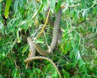 Snake on a tree Stock Photo