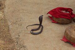 Snake trick. By Charmer. in india Stock Image
