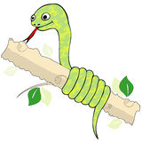 Snake twisting branch Stock Photos