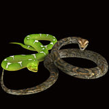 Snake. Stock Images