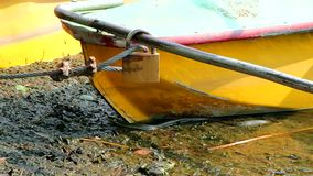 Snake in the water near the boat stock footage