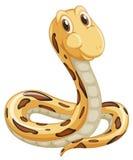 Snake on white Stock Image