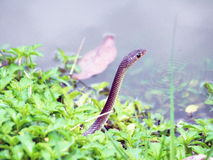 Snake in the wild Stock Images