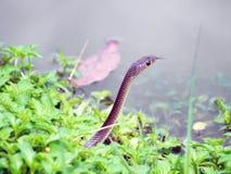 Snake in the wild Stock Photos