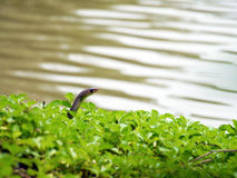 Snake in the wild Stock Image