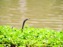 Snake in the wild Stock Photo