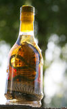 Snake Wine Royalty Free Stock Photos