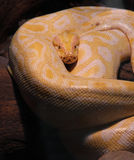 Snake zoo Stock Photography