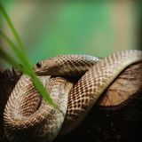 Snake in the zoo. I clicked his image in zoo Stock Photo