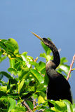 Snakebird Royalty Free Stock Images