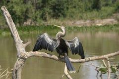 snakebird photos stock