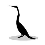 Snakebird anhinga black silhouette bird animal Stock Photos