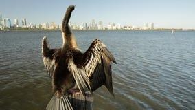 Snakebird z Perth linią horyzontu
