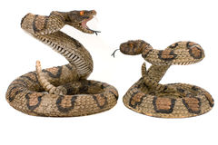 Snakes Royalty Free Stock Photo