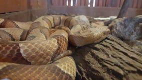 Snakes. Beautiful animals brown Wood stock photos