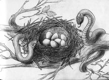 Snakes in the bird's nest stock illustration