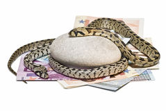 Snakes looking after the money. Stock Images