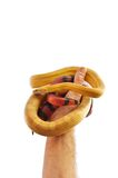 Snakes in my hand Stock Photo