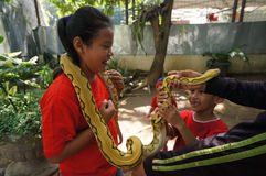Snakes Royalty Free Stock Photo