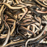 Snakes for sale at asian food market Royalty Free Stock Photography