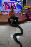 Snakes. Snake fans gathered at a mall in monthly meetings in Karanganyar, Central Java, Indonesia stock photography