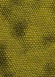Snakes_texture_green Royalty Free Stock Photo
