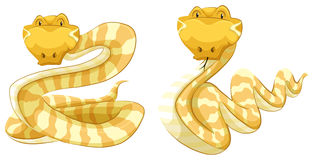 Snakes Royalty Free Stock Photos