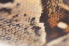 snakeskin горжетки Стоковое Фото