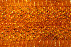 Snakeskin Photo stock
