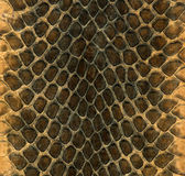 Snakeskin Image stock
