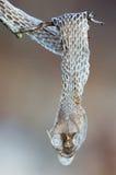 Snakeskin Stock Image
