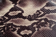 Snakeskin Royalty Free Stock Photography