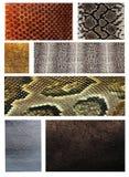 Snakeskin Fotos de archivo