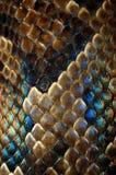 snakeskin Στοκ εικόνες με δικαίωμα ελεύθερης χρήσης