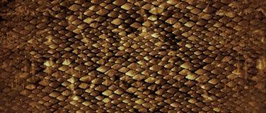 snakeskin Стоковая Фотография RF