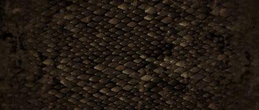 snakeskin Стоковое Изображение RF