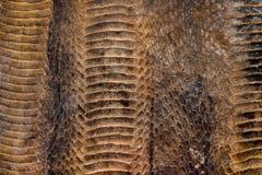 snakeskin imagem de stock