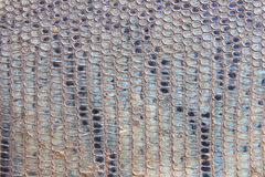 Snakeskin background Royalty Free Stock Image