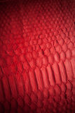 Snakeskin bag. Snakeskin leather bag with closeup texture Royalty Free Stock Photo