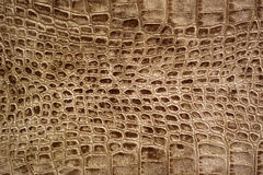 Snakeskin or crocodile texture Stock Photography