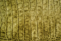 Snakeskin or crocodile texture. For background Royalty Free Stock Photography