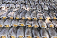 Snakeskin gourami dried salted, ready for frying Royalty Free Stock Image