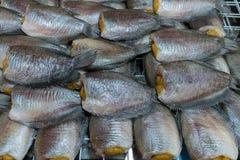 Snakeskin gourami Fish dried in market. Asia Stock Image