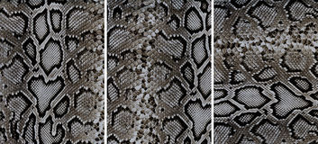 Snakeskin leather textures. Set of snakeskin leather textures closeup for background Royalty Free Stock Image