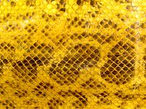 Snakeskin Macro. Close-up image of snakeskin texture Royalty Free Stock Photos