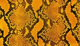 Snakeskin raya el modelo Foto de archivo